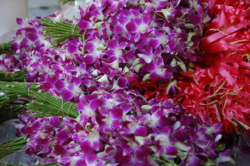 Colorful Orchids - Phang Nga, Thailand