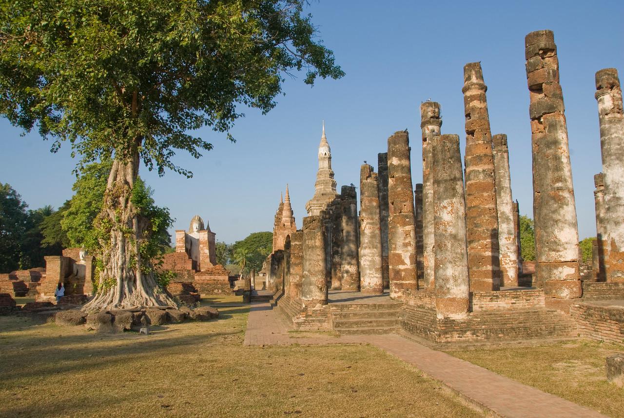 Pillars and a tree inside the Wat Mahathat ruins - Sukhothai, Thailand