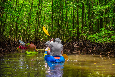 Group of tourists kayaking in the mangrove jungle