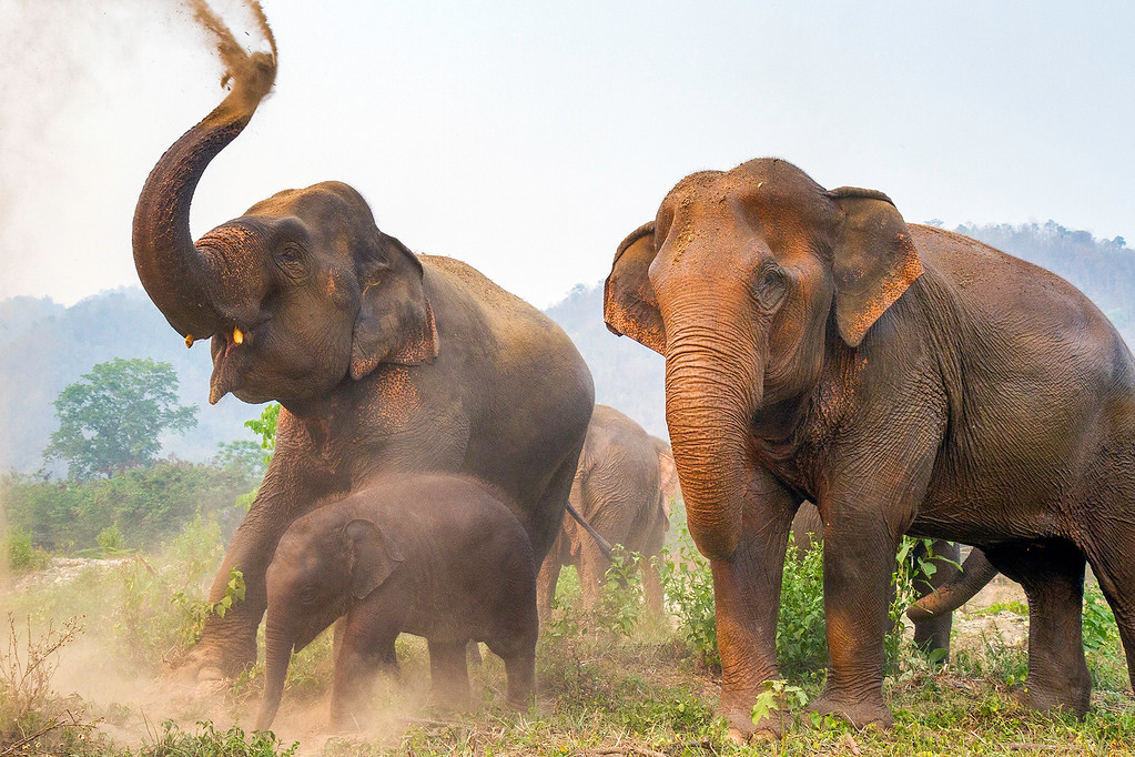 Elephant Family in Thailand