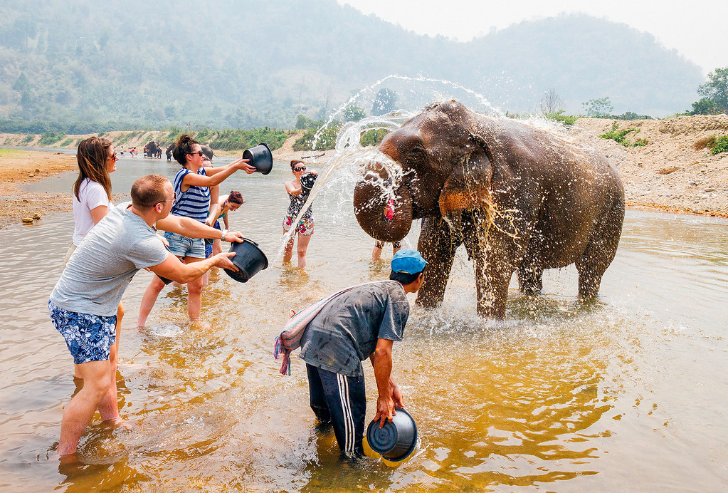 Elephants being washed by tourists