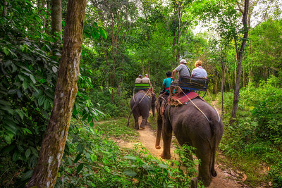 Tourists riding elephants in Thailand