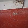 Tiny lizard, Boracay