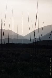 the Dead Sticks