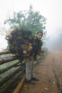 Boy with firewood
