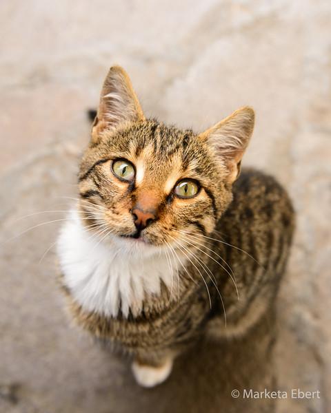 Begging feral cat