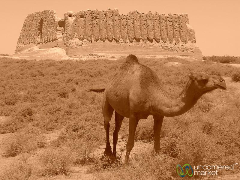 Camel in Front of Kyz Kala - Merv, Turkmenistan