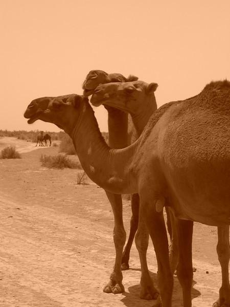 Three Camels - Gonur Depe, Turkmenistan