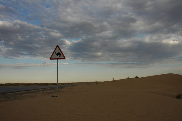 Camel Crossing in the Desert - Karakum Desert, Turkmenistan