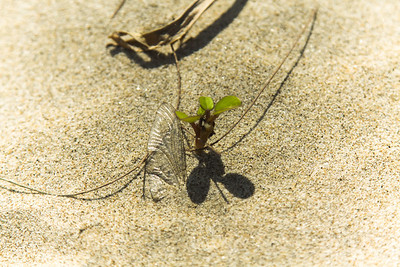 Death and life in the sand