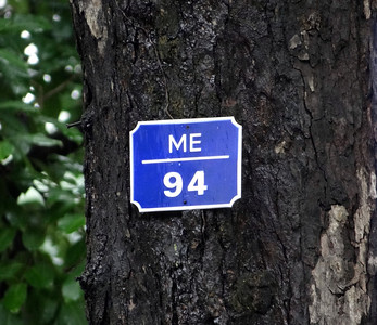 In central Hanoi, trees are named & numbered