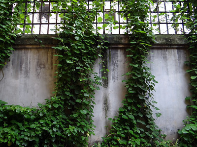 Hoa Lo Prison, aka Hanoi Hilton - Nature always wins.