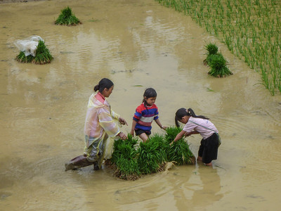 Kids are used heavily for farming rice & tending animals