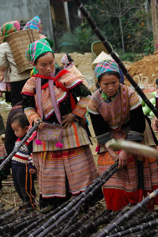 Women Choosing Sugar Cane - Bac Ha, Vietnam
