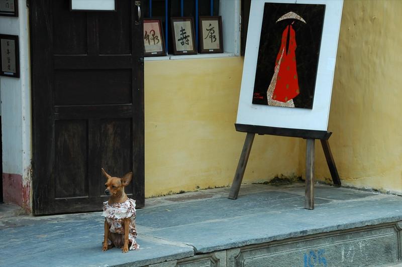 Dog in a Dress - Hoi An, Vietnam