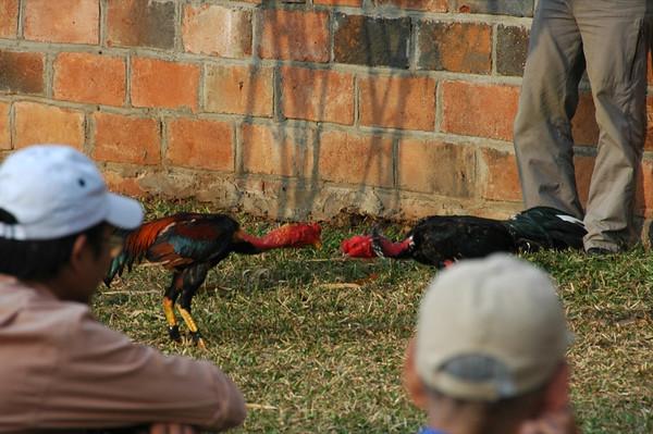 Cock Fighting - Hanoi, Vietnam