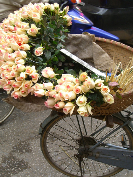 Roses on a Bike - Hanoi, Vietnam