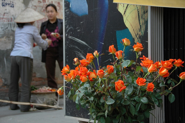Orange Roses  - Hanoi, Vietnam