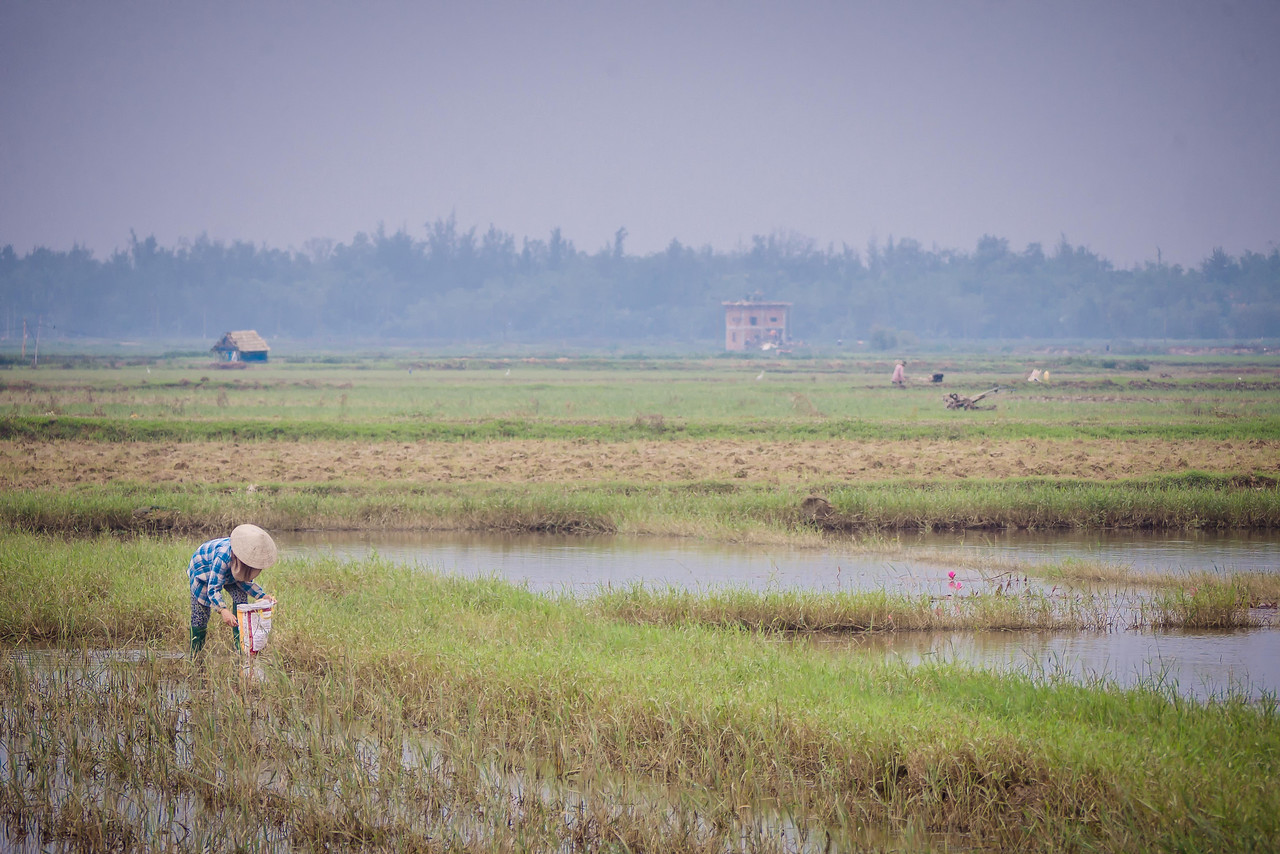 biking around hoi an through the rice paddies
