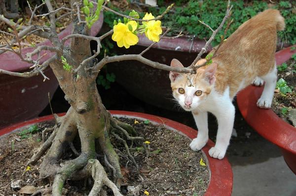 Little Kitty - Mekong Delta, Vietnam