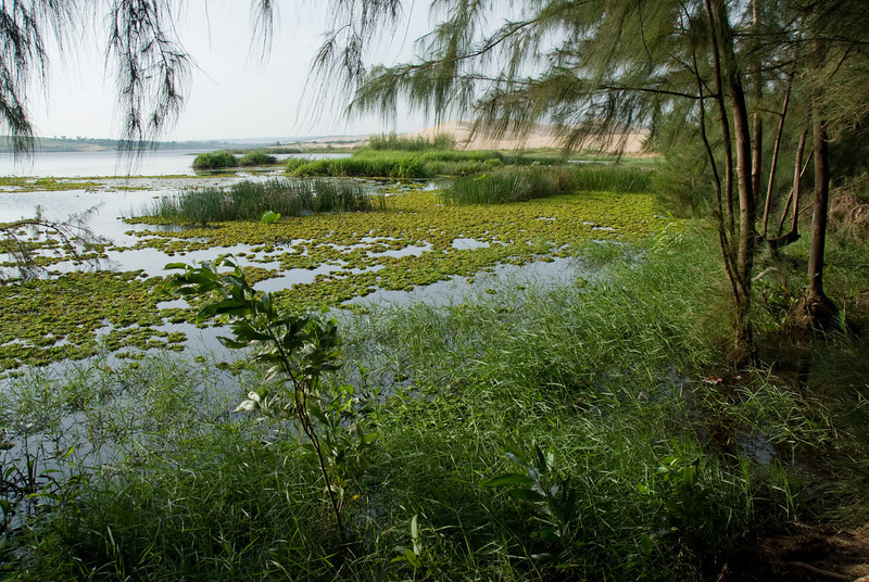 View of the white sand dunes and swamp - Mui Ne, Vietnam