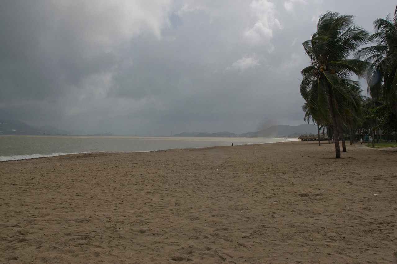 Stormy winds blowing palm trees at Nha Trang, Vietnam