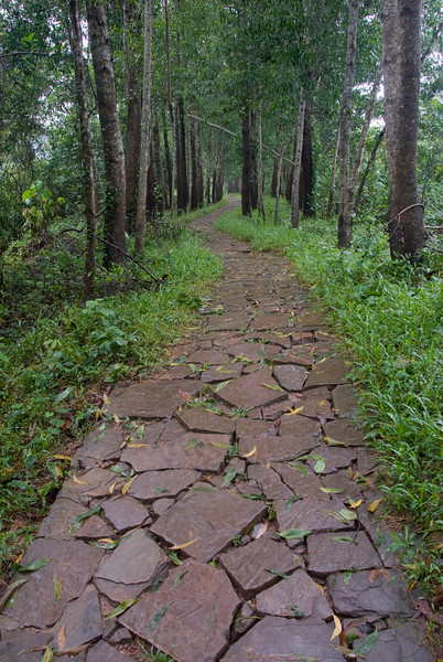 Cobblestone paths amidst trees - My Son Sanctuary, Vietnam