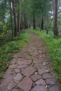 Cobblestone paths amidst trees - My Son Sanctuary, Vietnam
