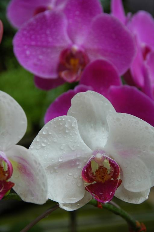 Orchids at the Tet Flower Market - Ho Chi Minh City, Vietnam