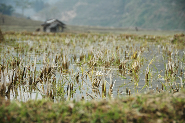 Rice Fields - Sapa, Vietnam