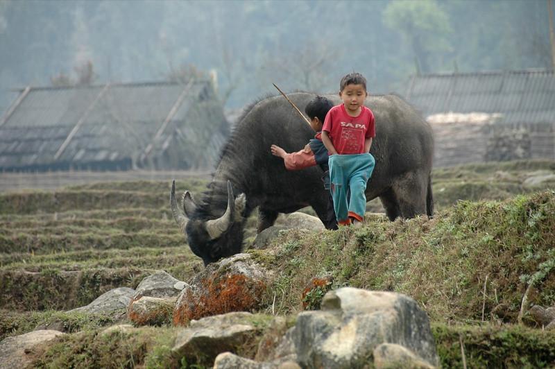 A Boy and A Water Buffalo - Sapa, Vietnam