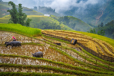 Stunning terraced rice fields sublimed by the misty mood.
