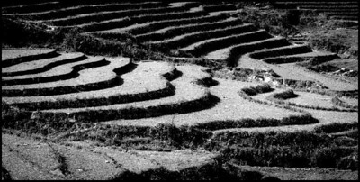 Terraces on route to Ta Phin, Sapa