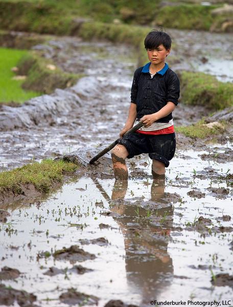 Rice Paddies near Sa Pa
