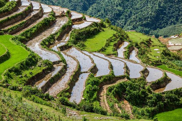 Rice field terraces. Near Sapa, Vietnam