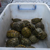 Turtles in a box
