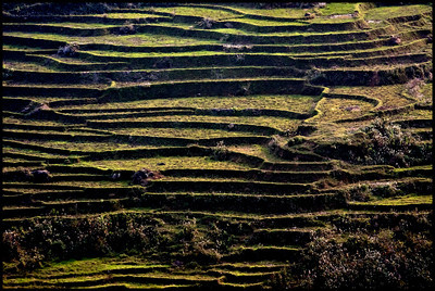Terraces, Sapa
