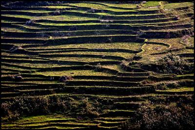 Terraces, Sapa