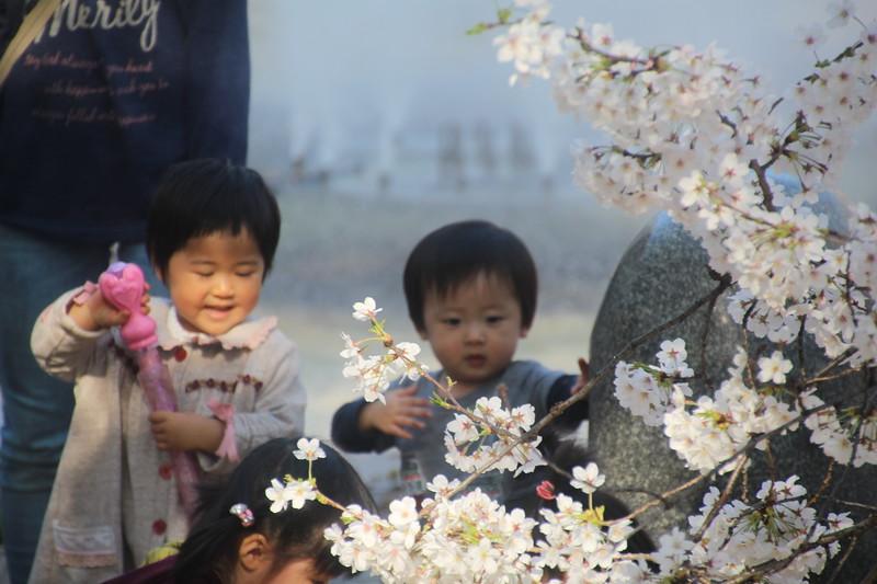 Nagoya Castle Garden, Children and blossoms