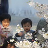 Nagoya Castle Garden, Children and blossoms