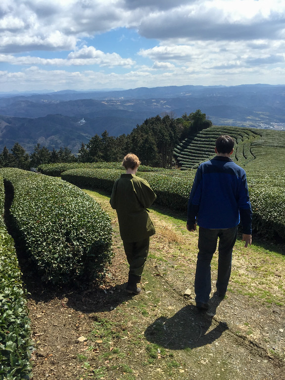 View of the Wazuka valley, at Ububu Tea Farm