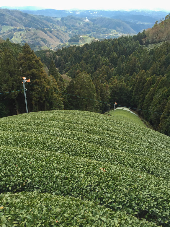 Japanese high mountain tea fields in Wazuka, Japan