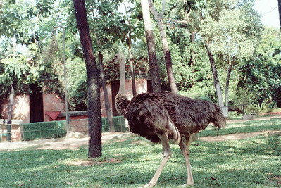 Zoo4-019.jpg