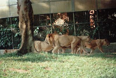 Zoo1-020.jpg