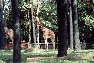 Zoo4-021.jpg