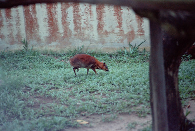 Zoo4-003.jpg