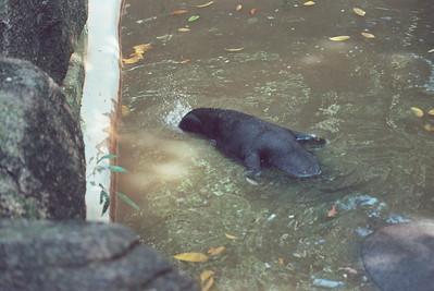 Zoo3-013.jpg