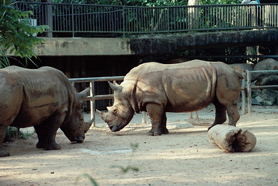 Zoo1-022.jpg