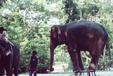 Zoo4-030.jpg