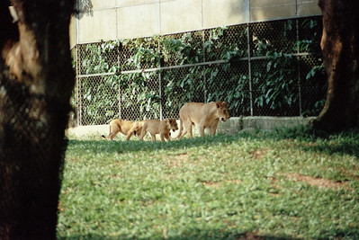 Zoo1-021.jpg